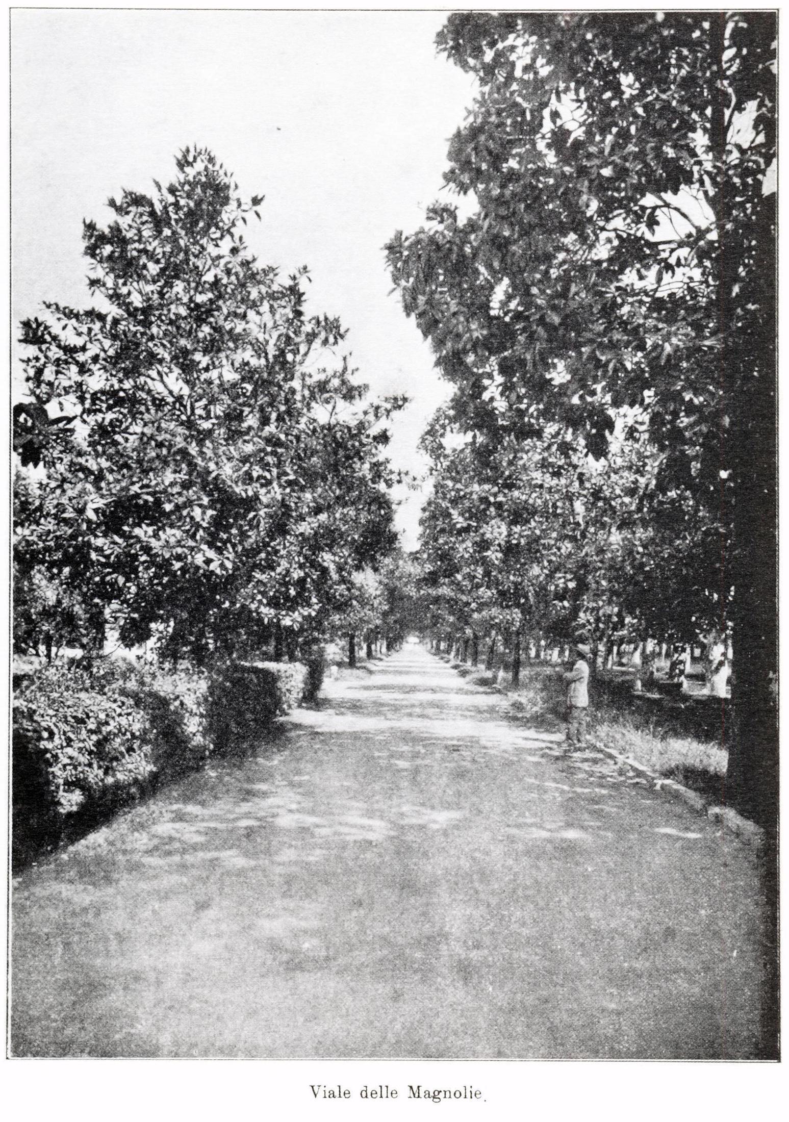 Viale delle Magnolie.
